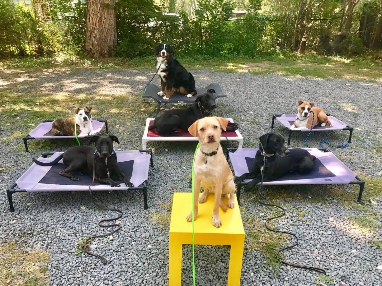 Bernese -mountain-dog.JPG