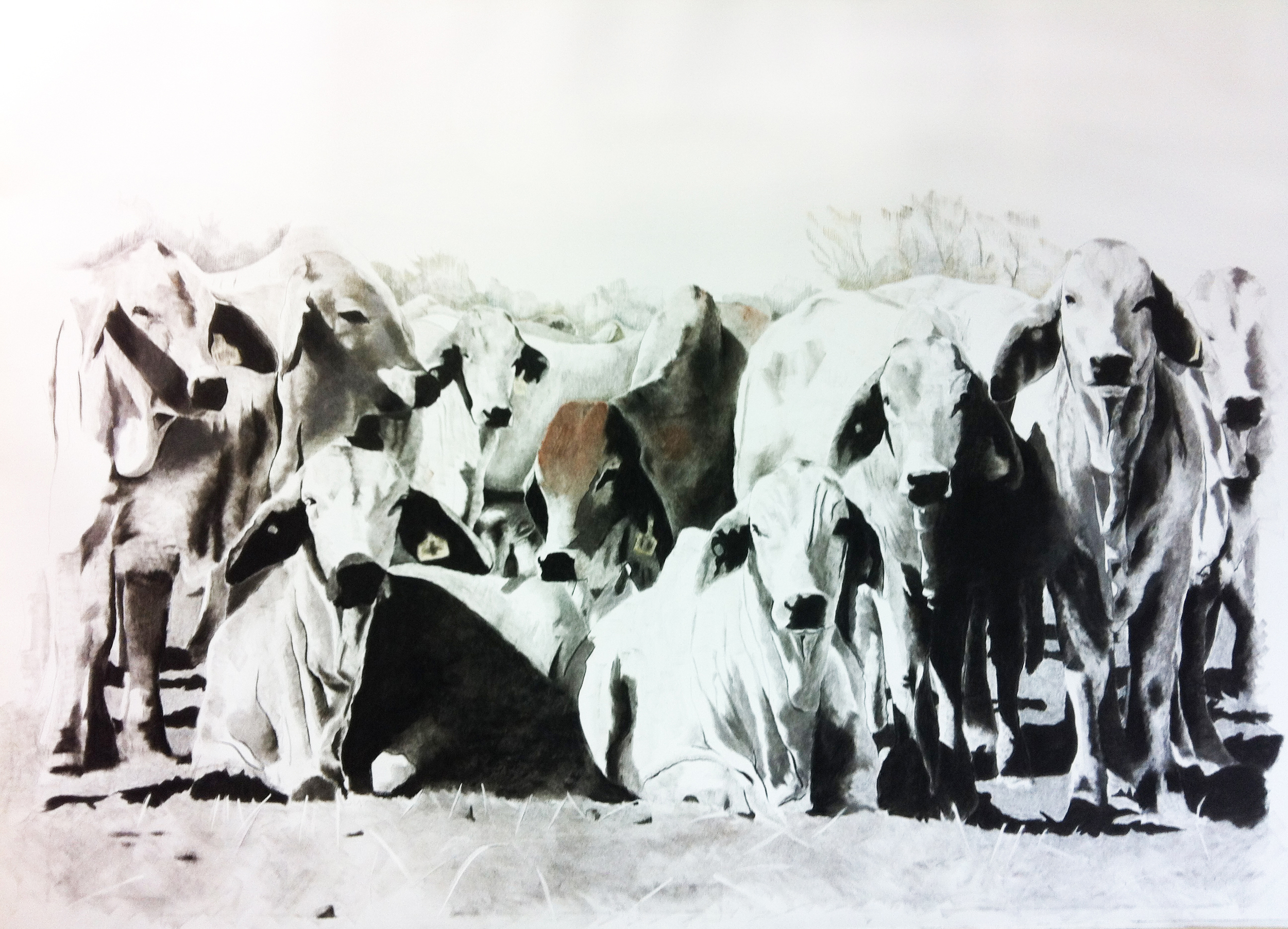 In a Class of Their Own  . Charcoal on paper. 120 x 150 cm.  ©  2012 Ida Montague. Corporate collection, Brisbane