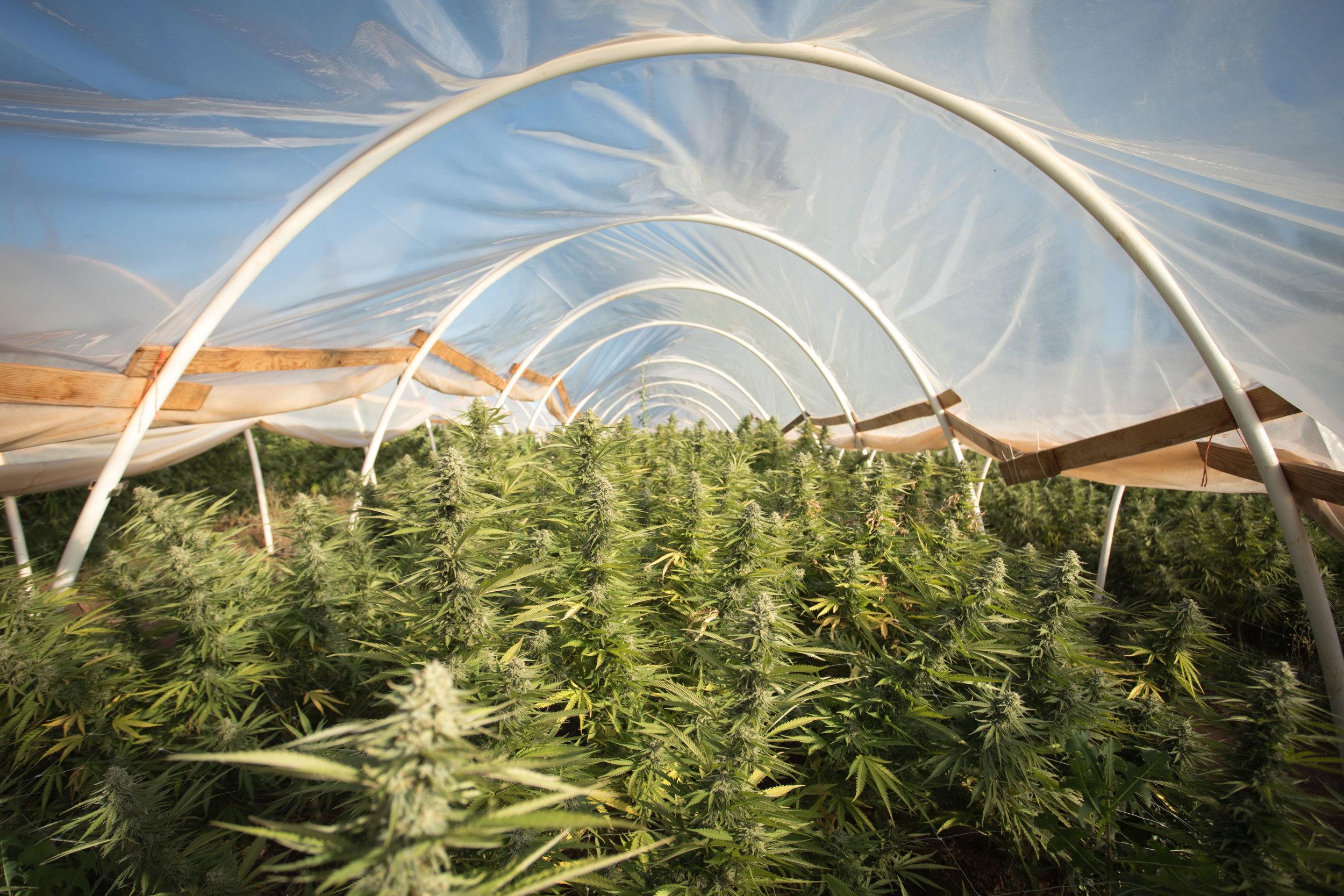 Bloom Farms  (2 of 9).jpg