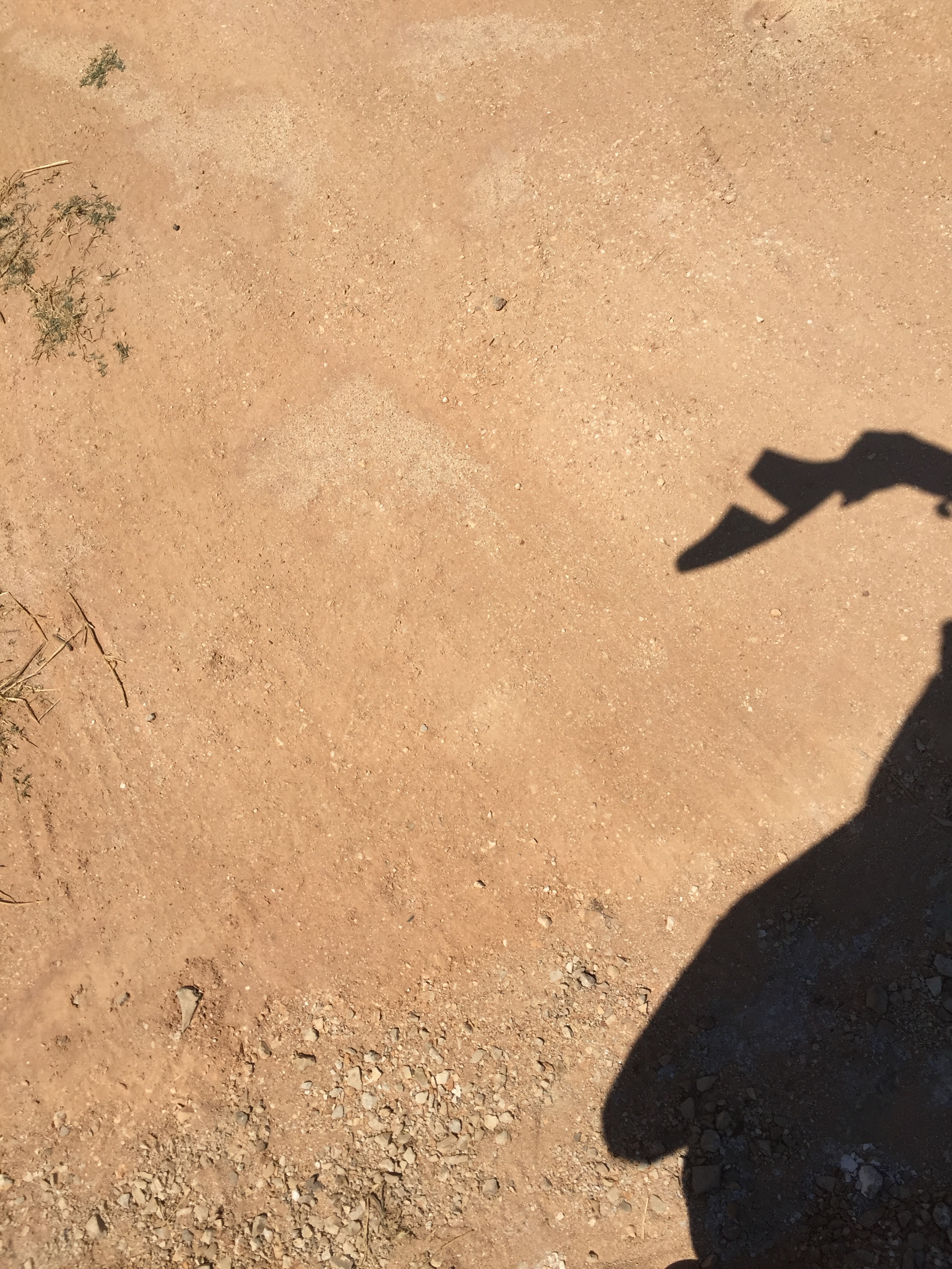 shadow play with the mule in white