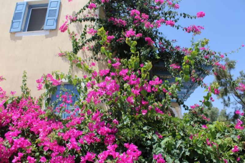 GenniferRose_SantoriniAirbnb2
