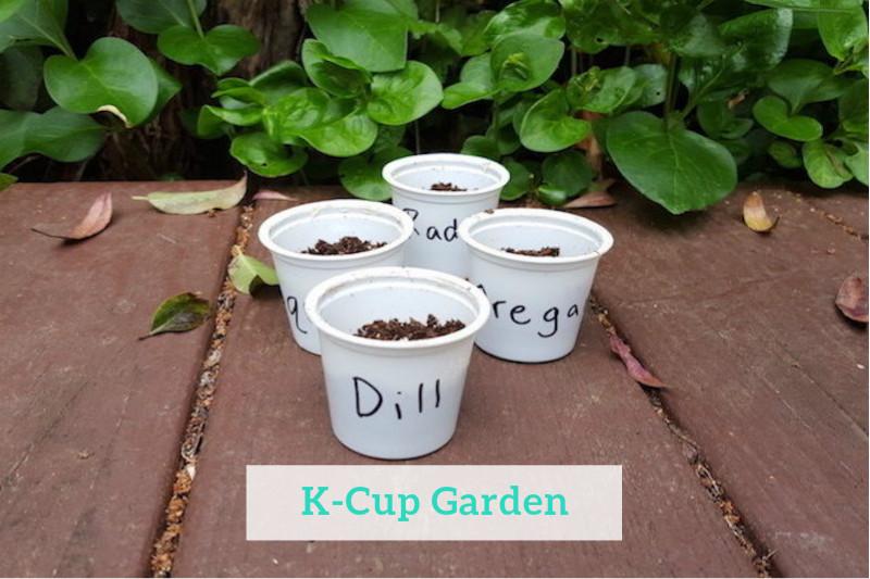 Gennifer Rose - K-Cup Garden