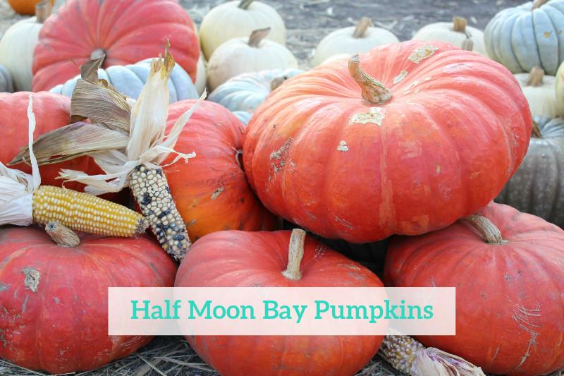 Gennifer Rose - Half Moon Bay Pumpkins