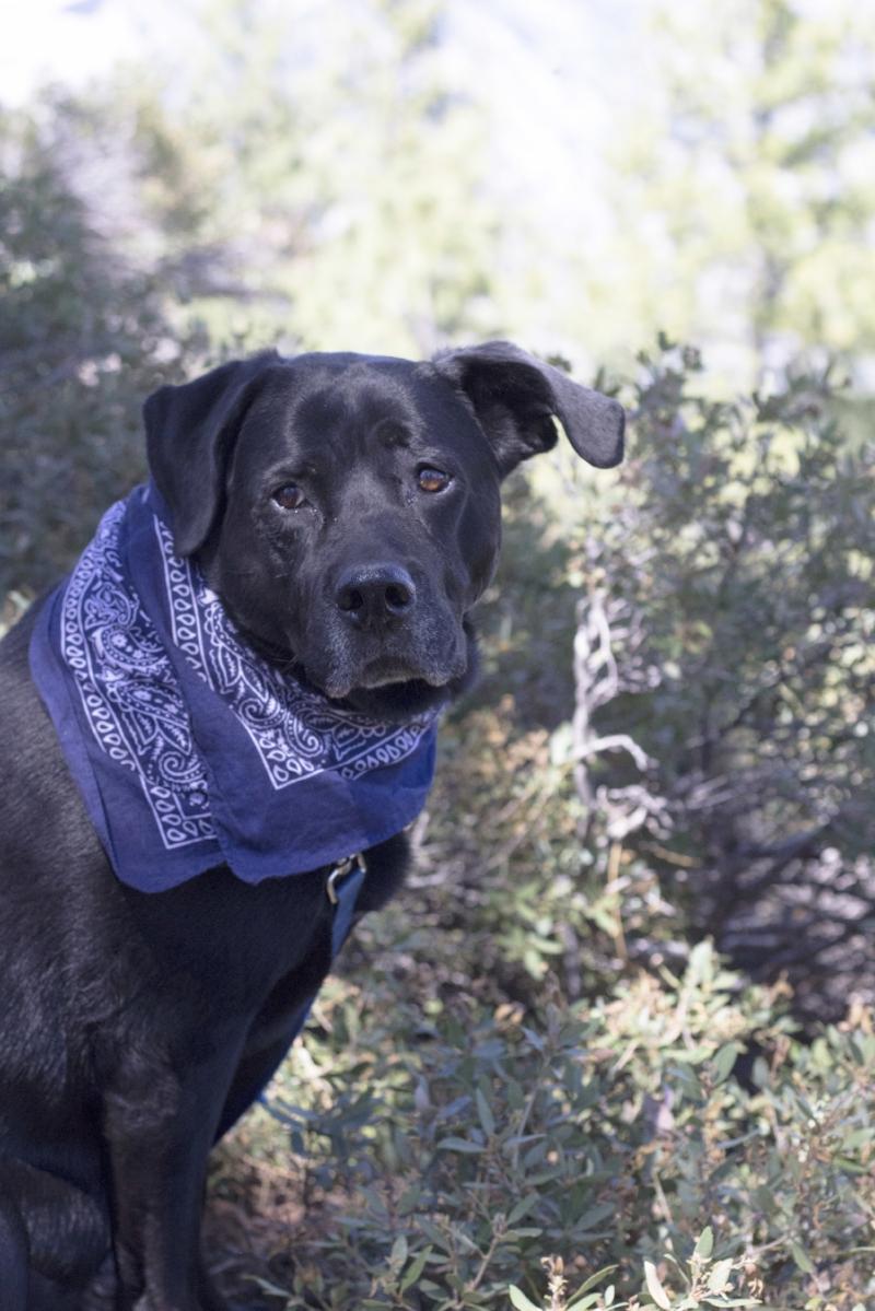 Gennifer Rose - Dog Friendly Travel Guide to Yosemite