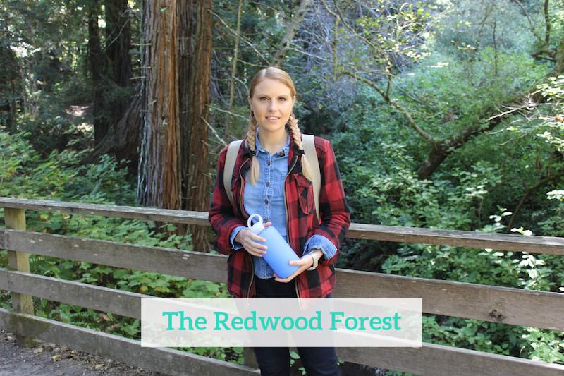 Gennifer Rose - The Redwood Forest