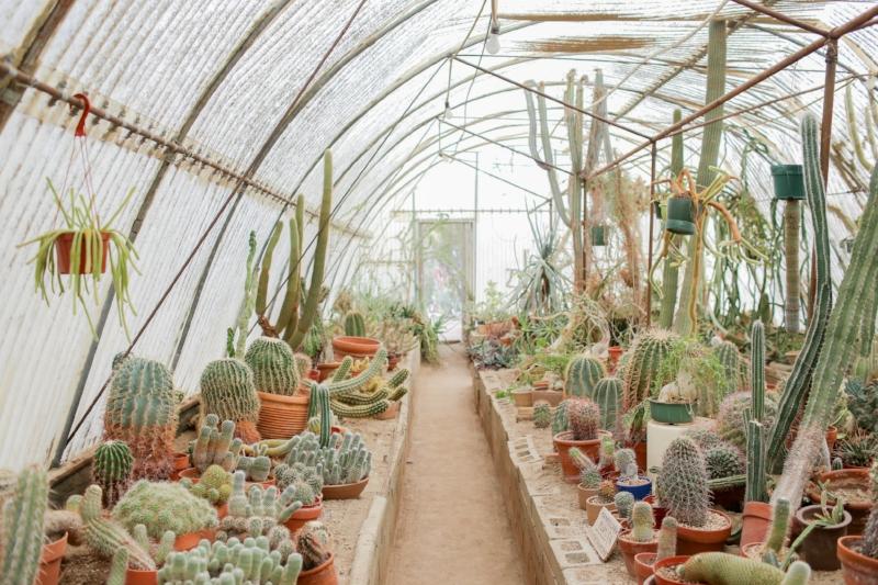 Gennifer Rose - Moorten Botanical Garden and Cactarium in Palm Springs