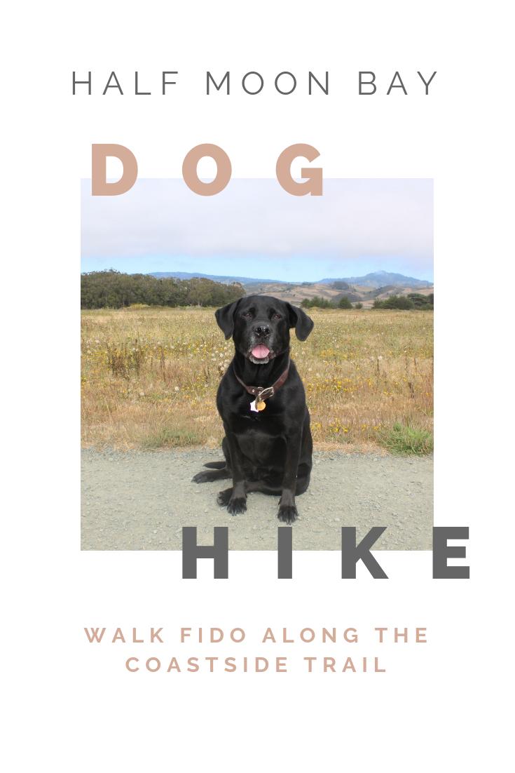 Dog Trail in Half Moon Bay