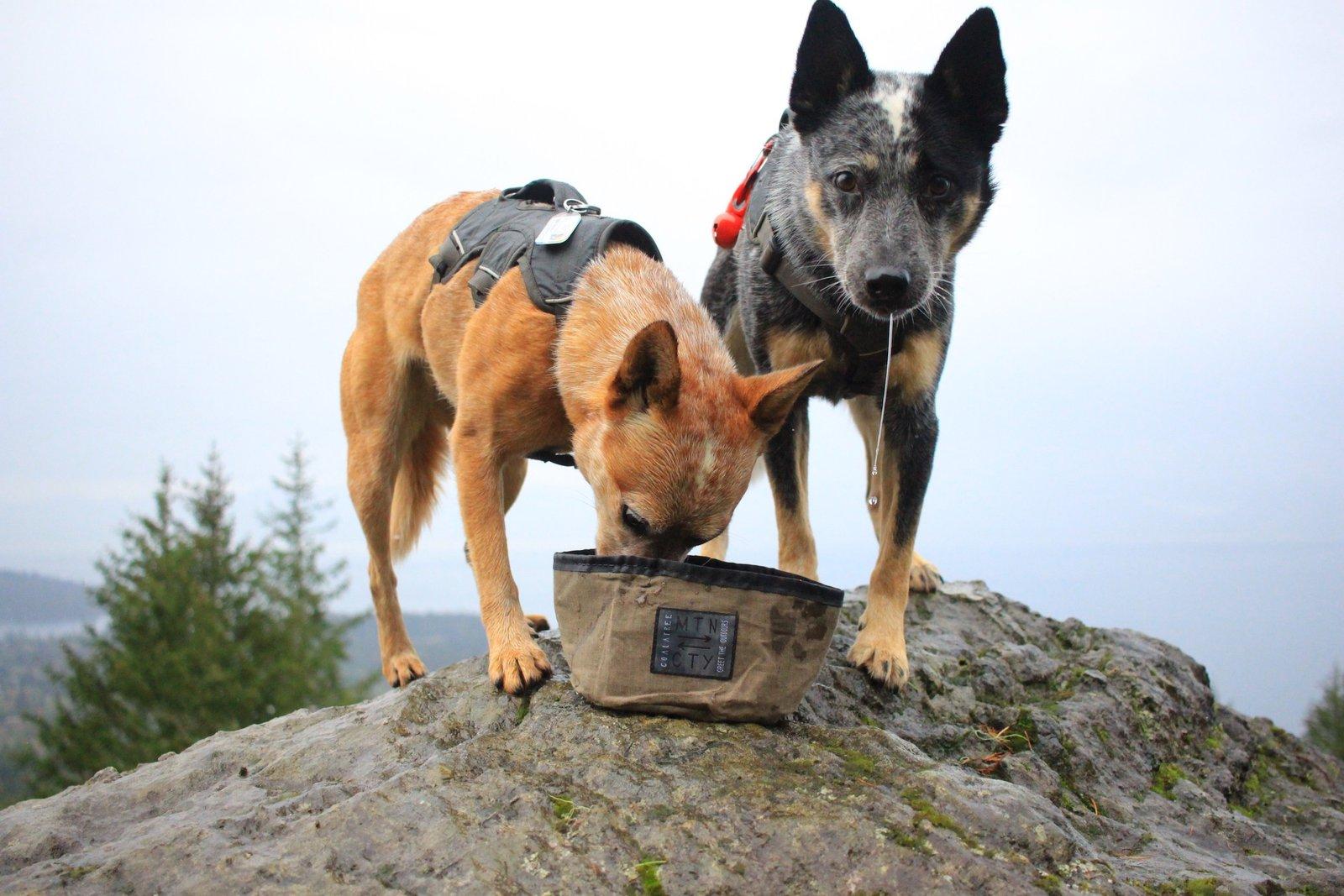 Hound Basin Packable Dog Bowl By Coalatree