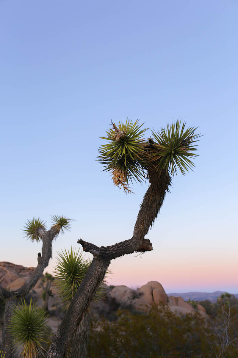 10 Hidden Gems Inside Joshua Tree National Park