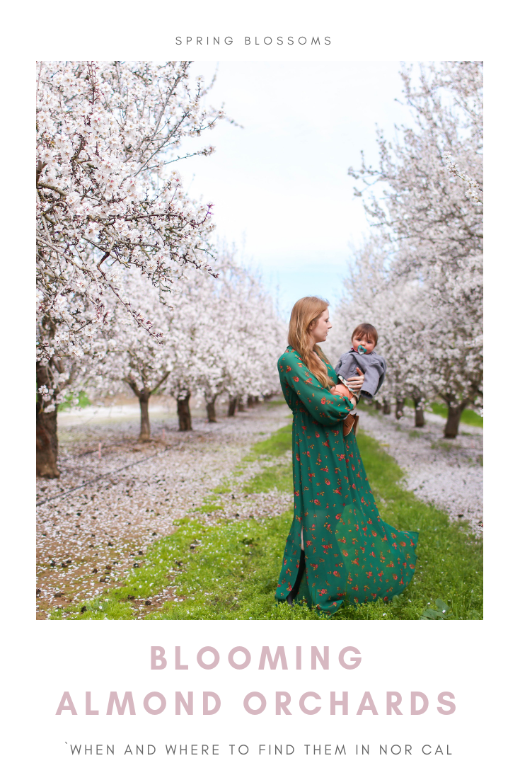 Gennifer Rose_Where to Find Blooming Almond Orchards in Northern California.png