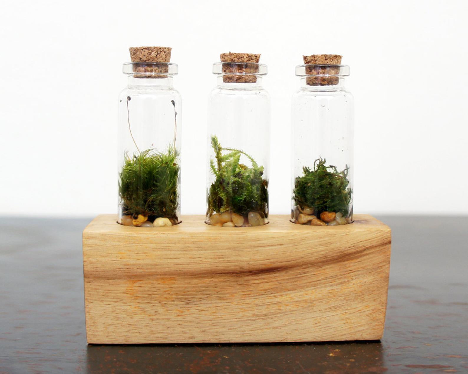 Triple Vial Terrarium Kit By Moss Twig