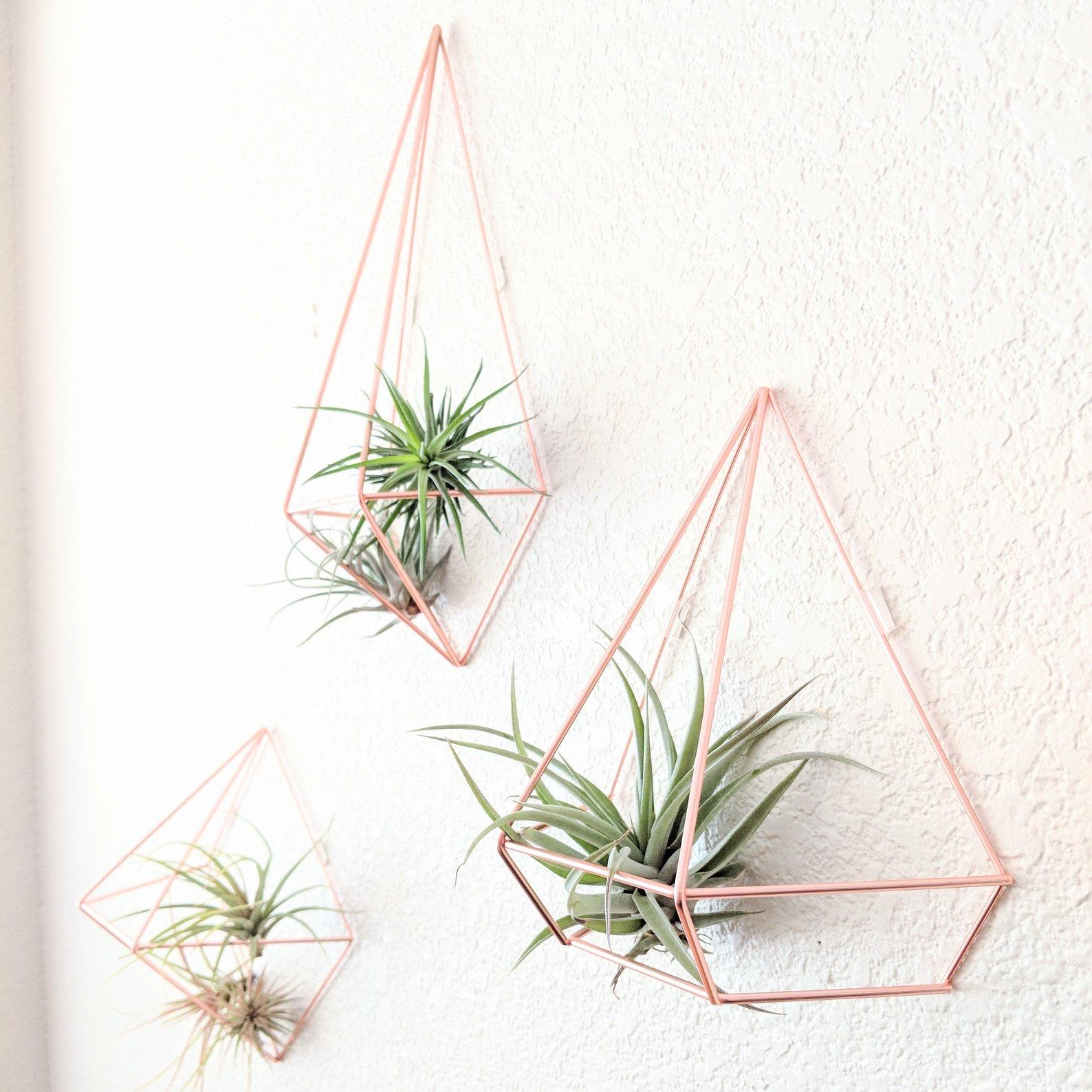Geometric Himmeli Style Air Plant Prism By Emma Claire Shop