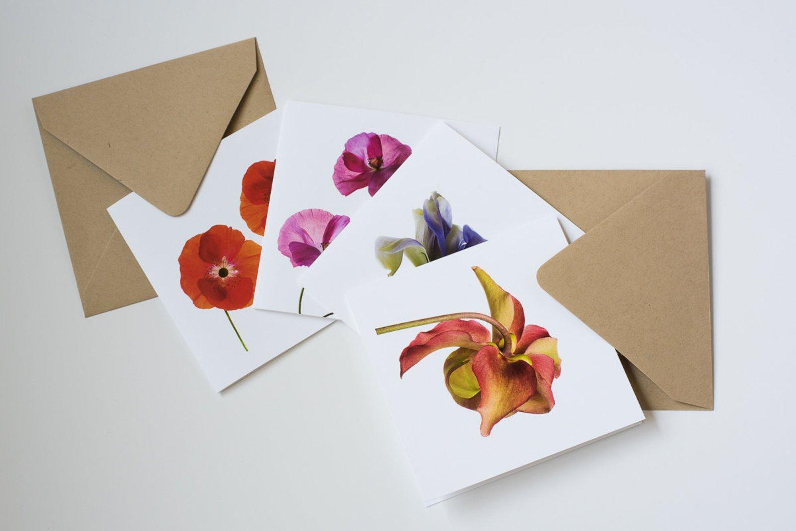BOTANICA Greeting Card Set By Ilene Hertz Design