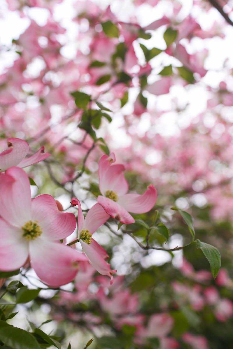 Gennifer Rose_Best Springtime Rainy Day Activities in Sacramento_11.jpg