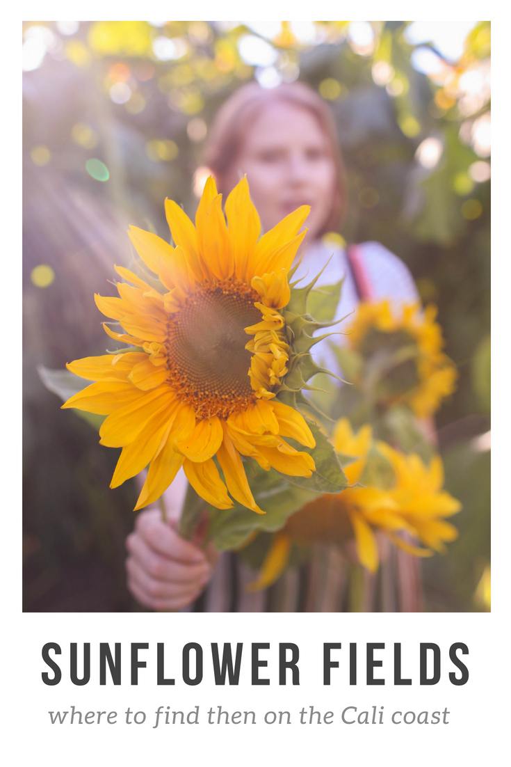 Gennifer Rose_Sunflower Fields.png