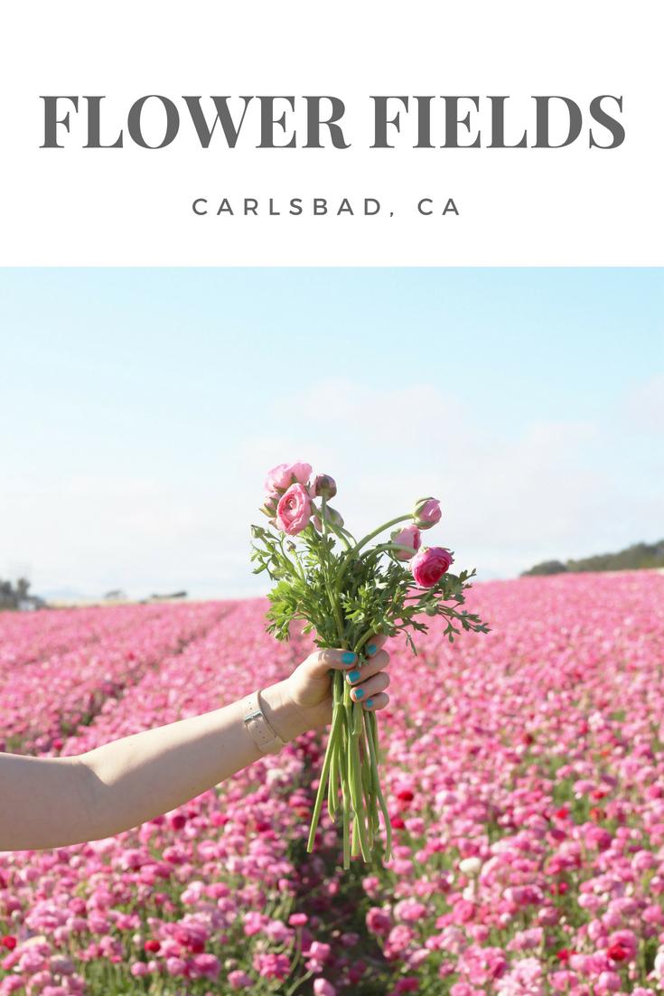 Gennifer Rose_Carlsbad Flower Fields.png