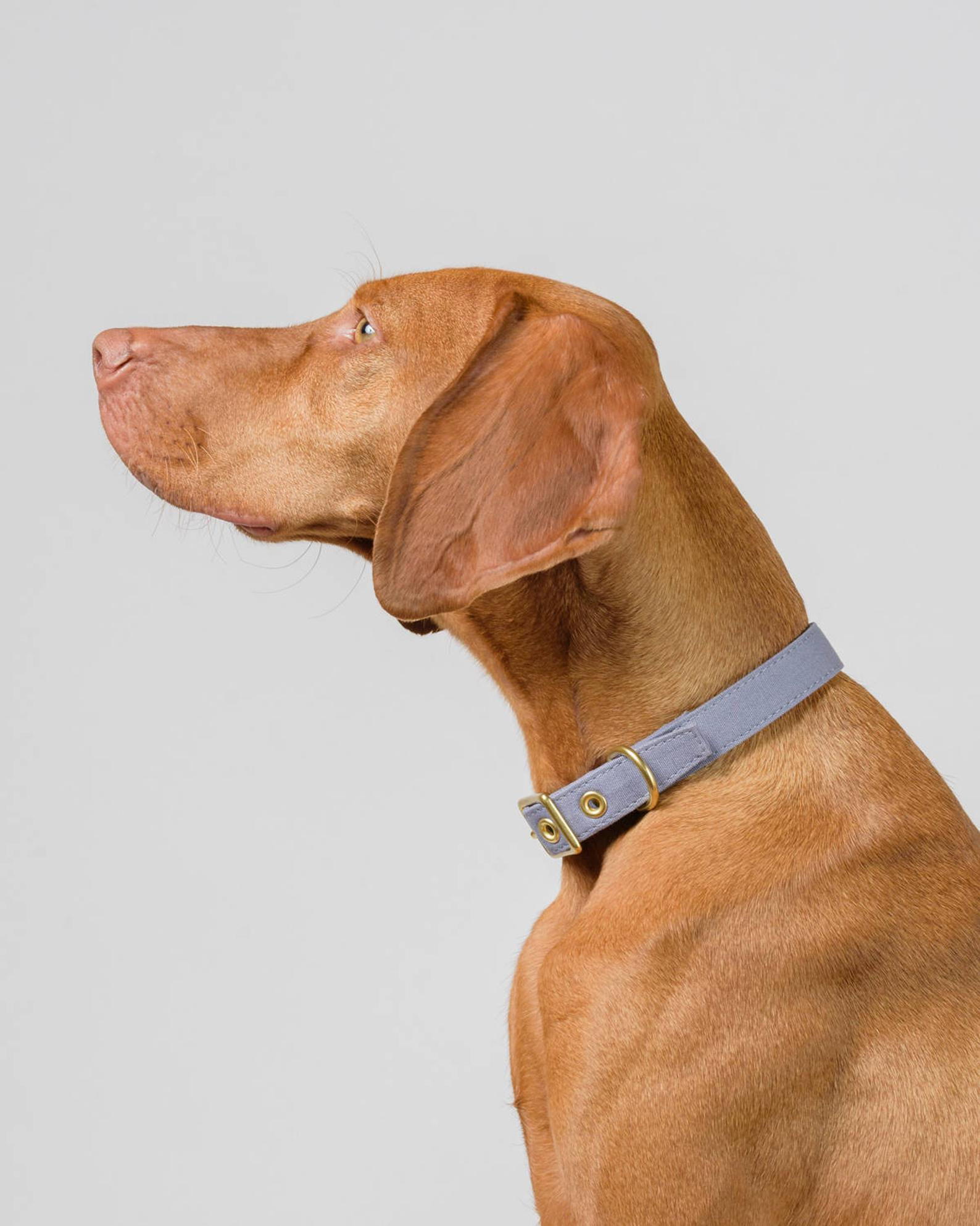 Storm Grey + Brass All Weather Dog Collar By Animals in Charge