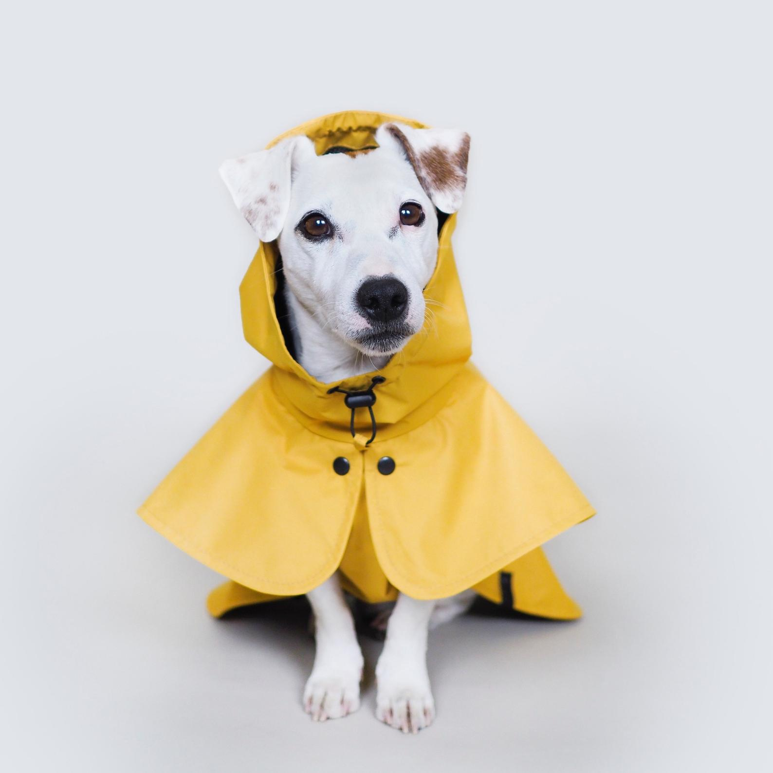 Dog Yellow Raincoat By Hunting Pony