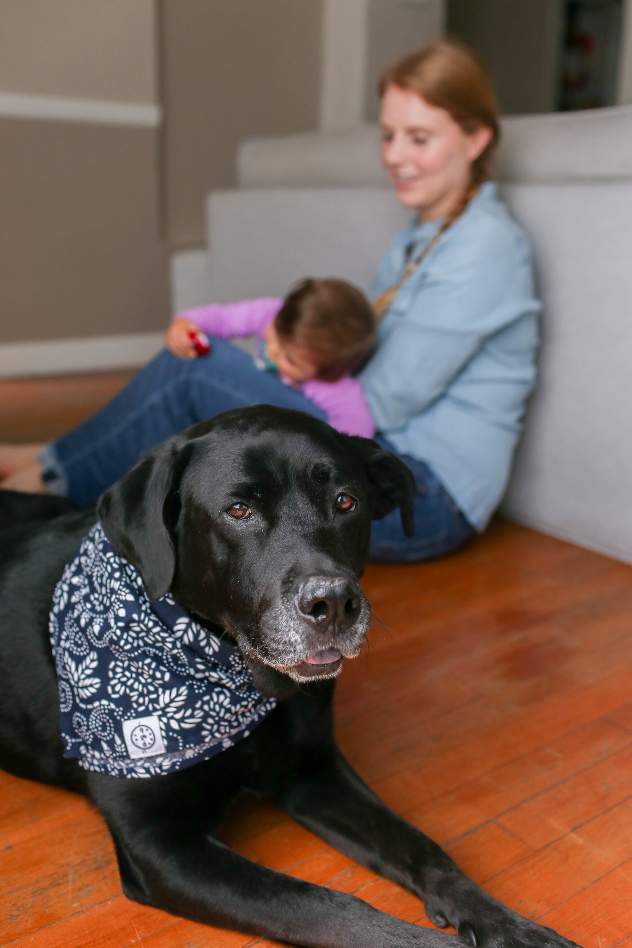 Gennifer Rose_10 Simple Ways to Prepare Your Home for a New Dog_9.jpg