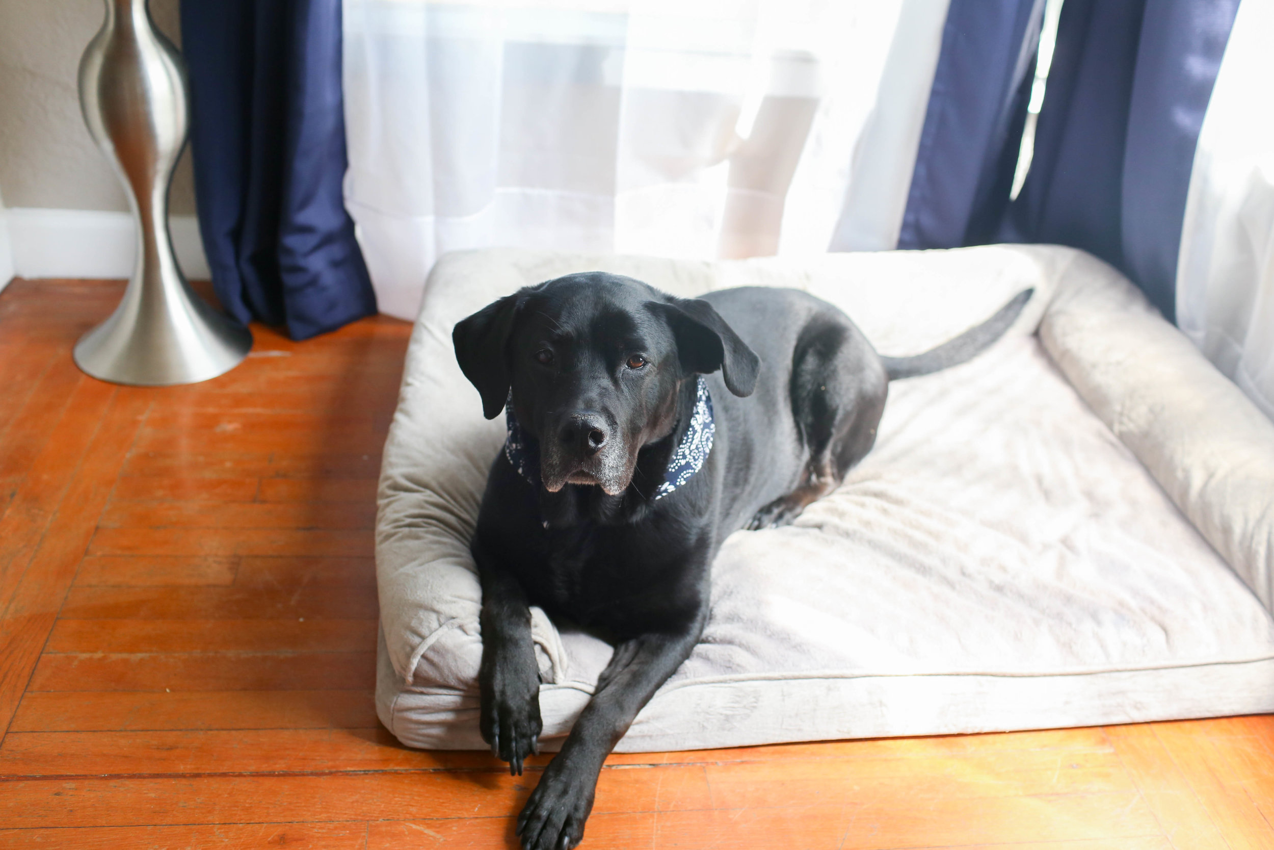 Gennifer Rose_10 Simple Ways to Prepare Your Home for a New Dog_6.jpg