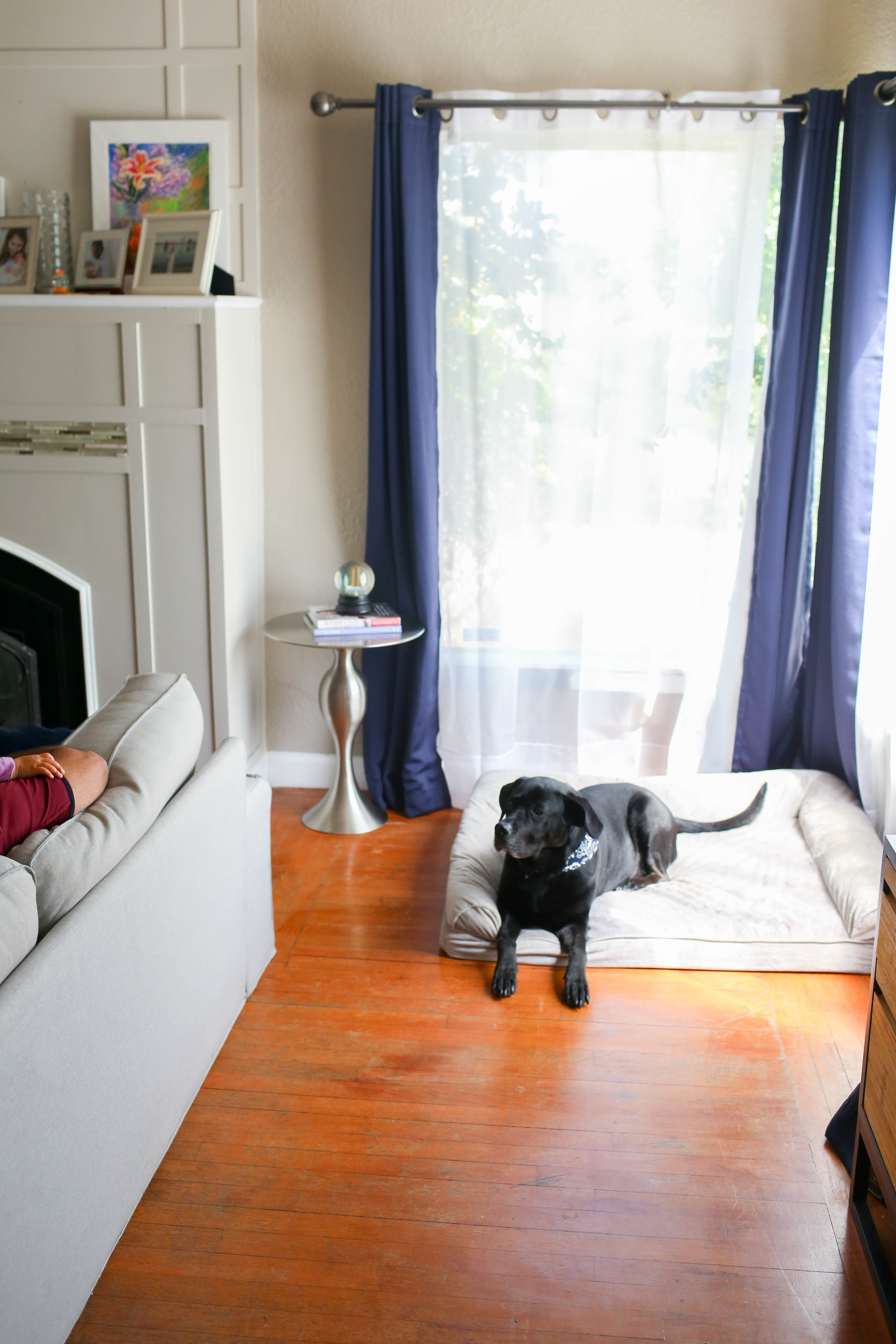 Gennifer Rose_10 Simple Ways to Prepare Your Home for a New Dog_7.jpg