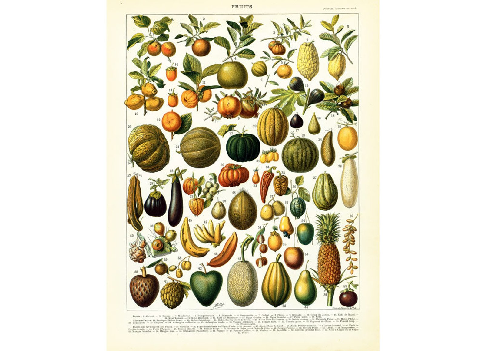 1897 Fruits and Avocado Print By So French Vintage