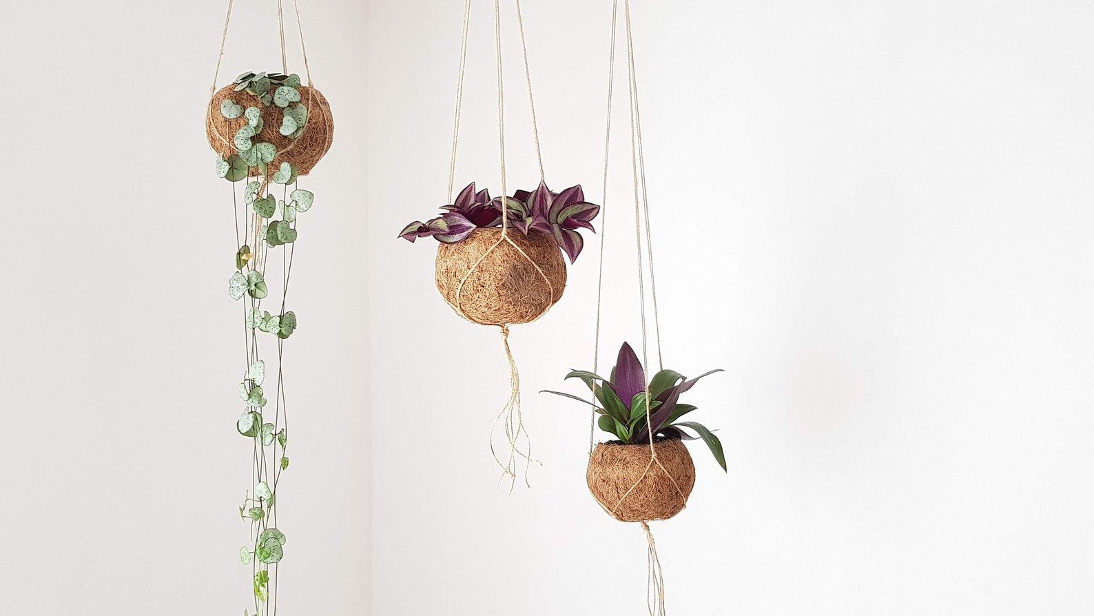 Kokedama Planters By Greenarium