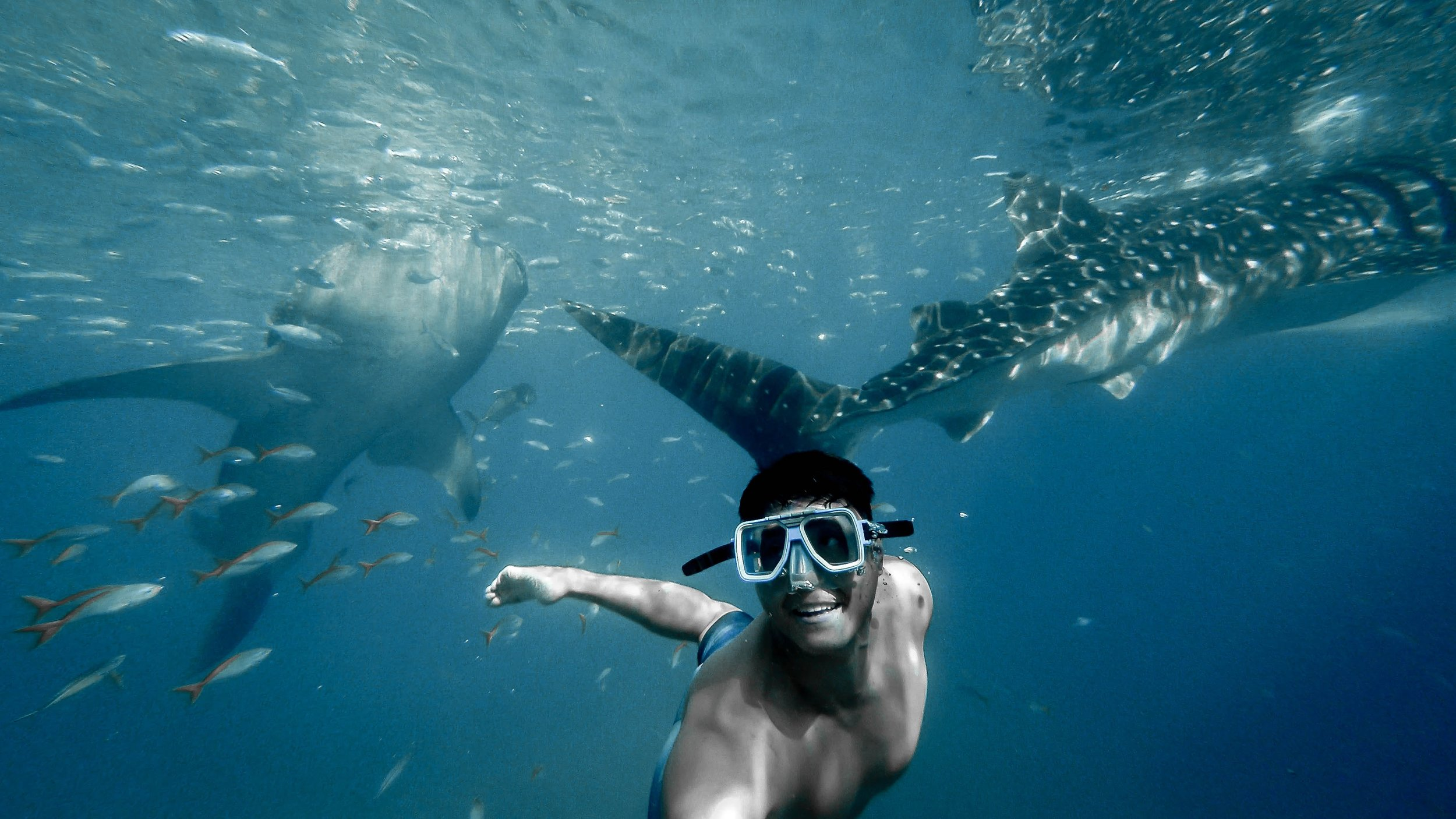 Shark Snorkel Tour in La Jolla - 2-Hour guided tour with gear included.