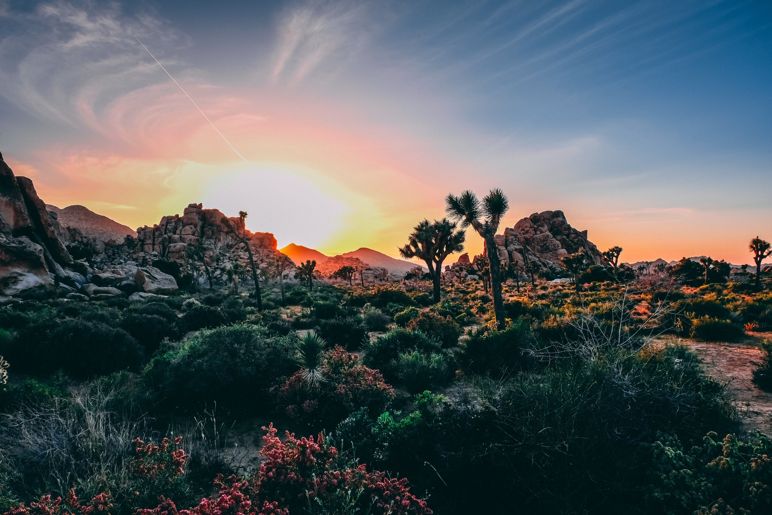 Joshua Tree Guided Hiking Tour - Customize your hike to find the hidden gems!