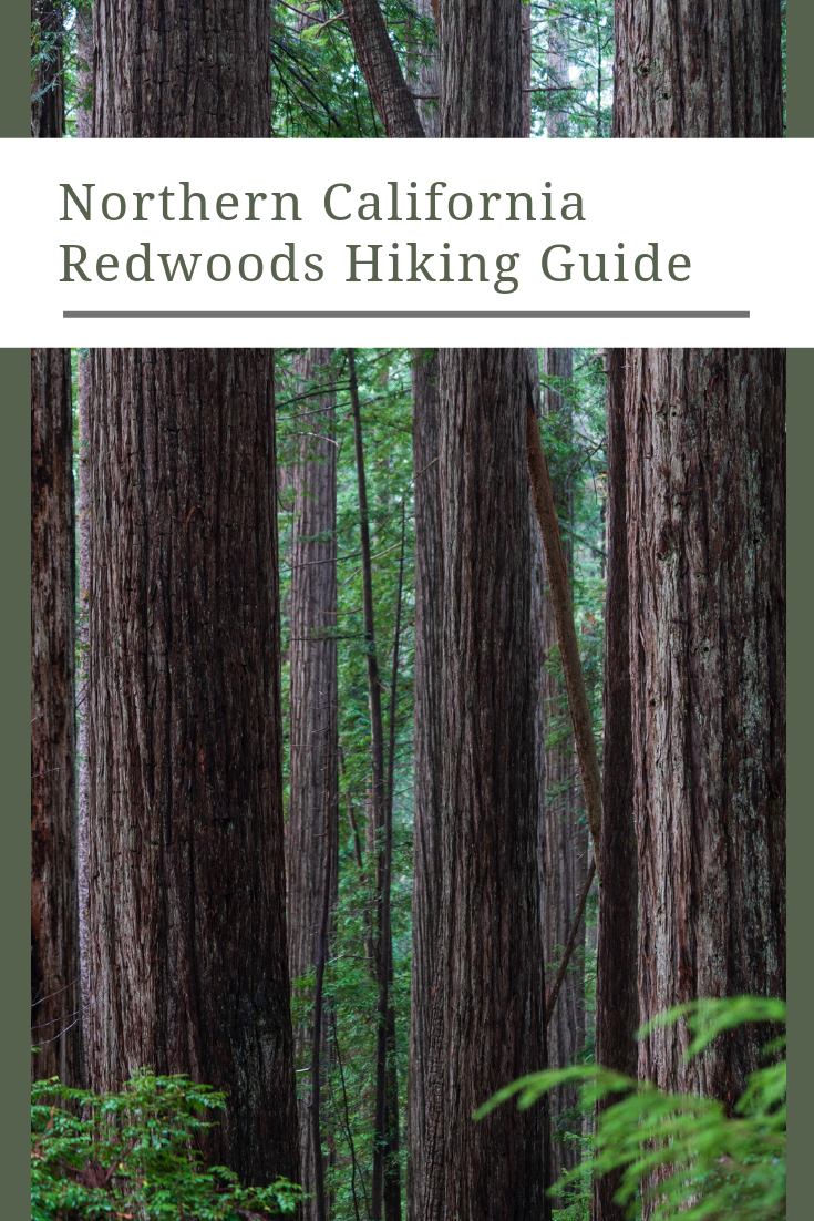 Purisima Creek Redwoods Preserve Hiking Guide.png