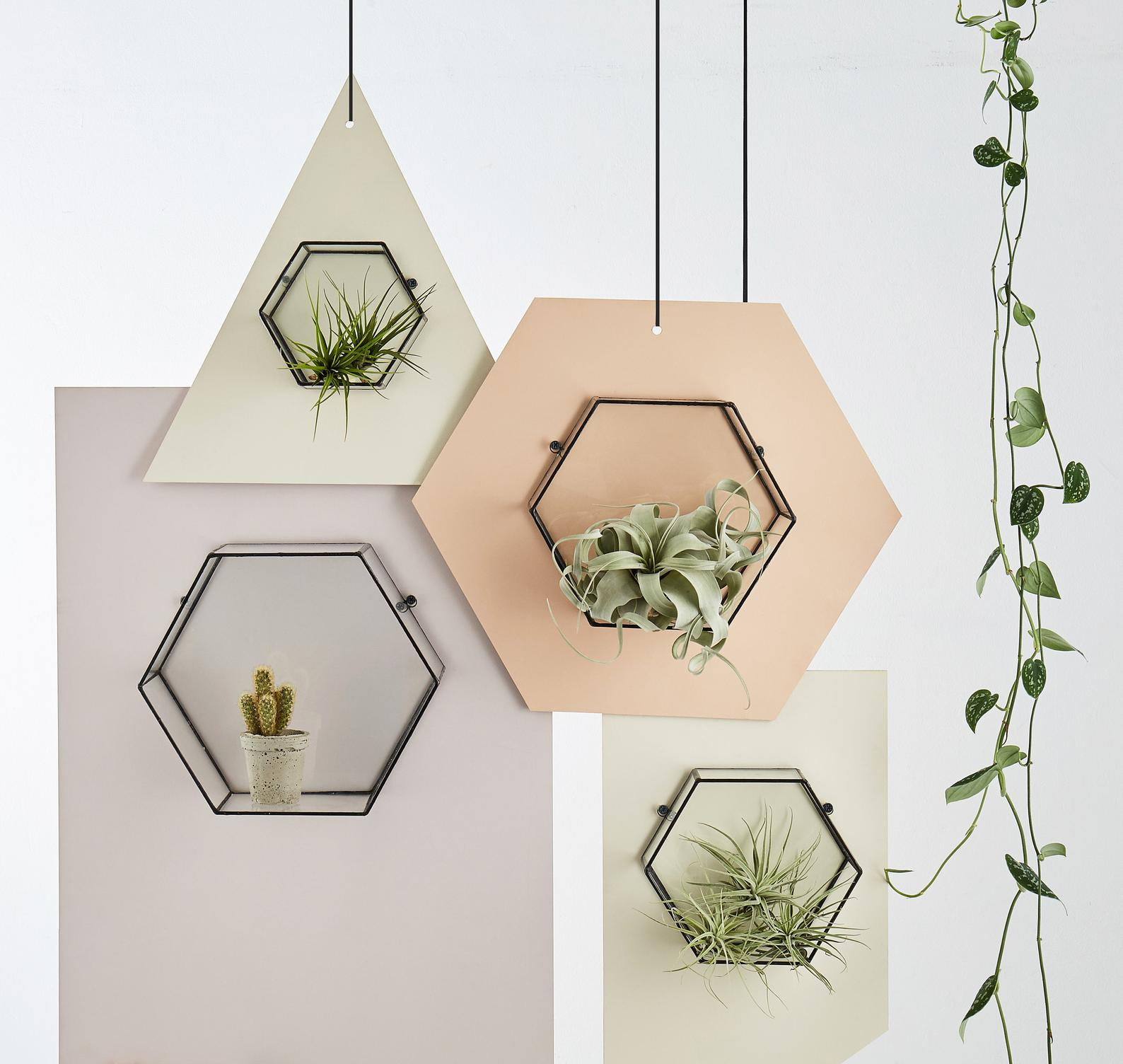 Varro Hexagon Glass Wall Display Shelf By Monti by Monti
