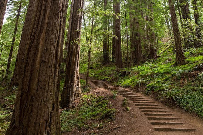 Muir Woods and Sausalito Half Day Tour - Wander through an ancient coastal redwood forest and explore the artistic bayside enclave of Sausalito on this half-day tour from San Francisco. Travel across the Golden Gate Bridge to visit Muir Woods, home to some of the oldest and tallest trees on Earth.