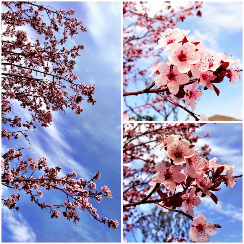 springtime+beauty+Collage1.jpg