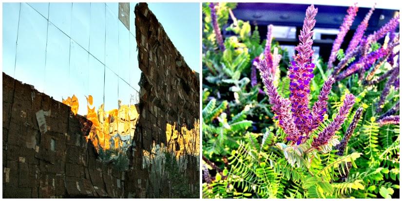 waterwall+floral+Collage.jpg