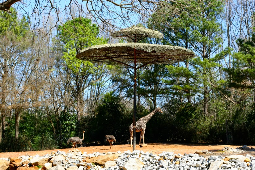 Giraffes%2Bat%2Bthe%2BAtlanta%2BZoo.jpg