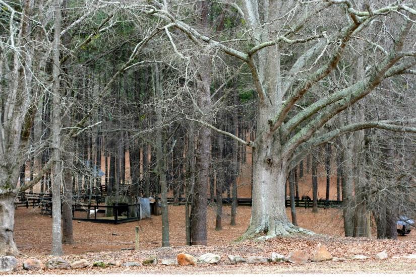 treebeard1.jpg