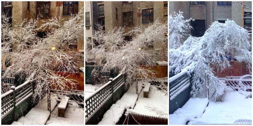 the+weighty+tree1.jpg