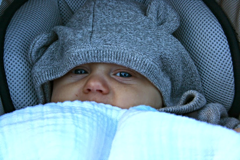 baby%2Bbear1.jpg