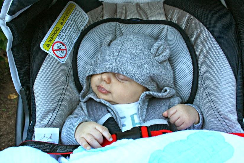 baby%2Bbear3.jpg