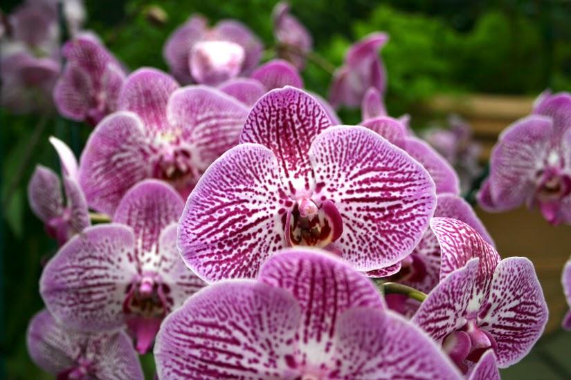 orchid1.jpg