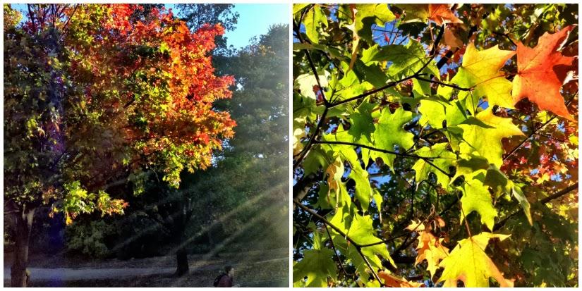 trees+Collage3.jpg