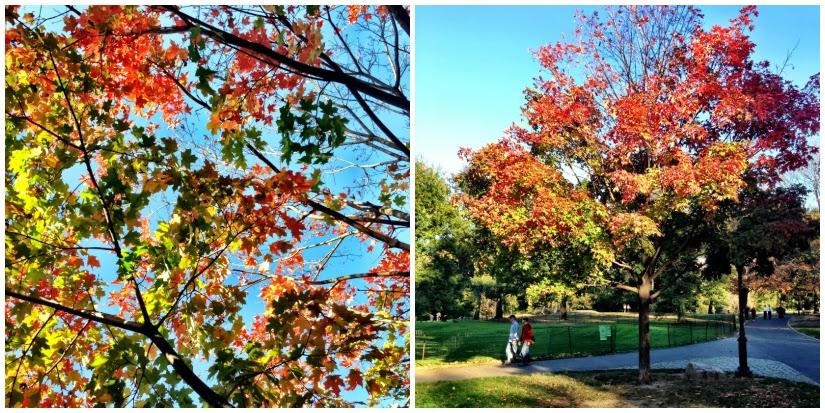 trees+Collage2.jpg