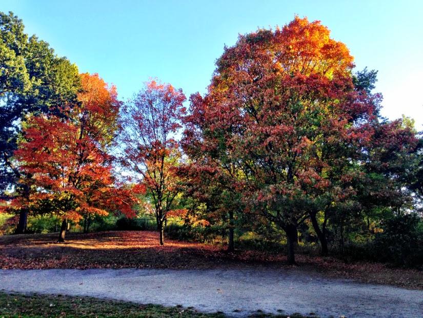 auburn+trees1.jpg