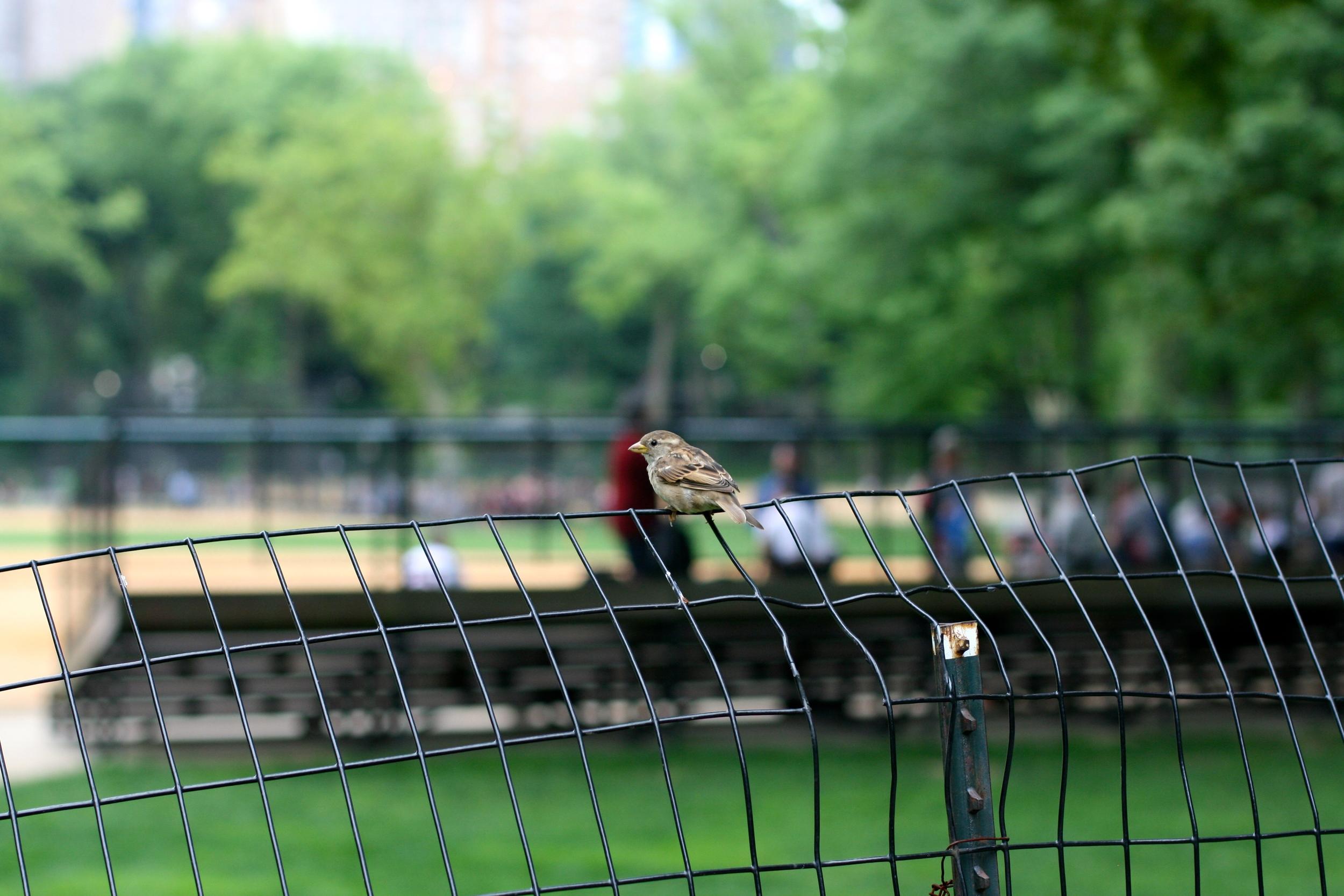 I'm always on the bird watch.