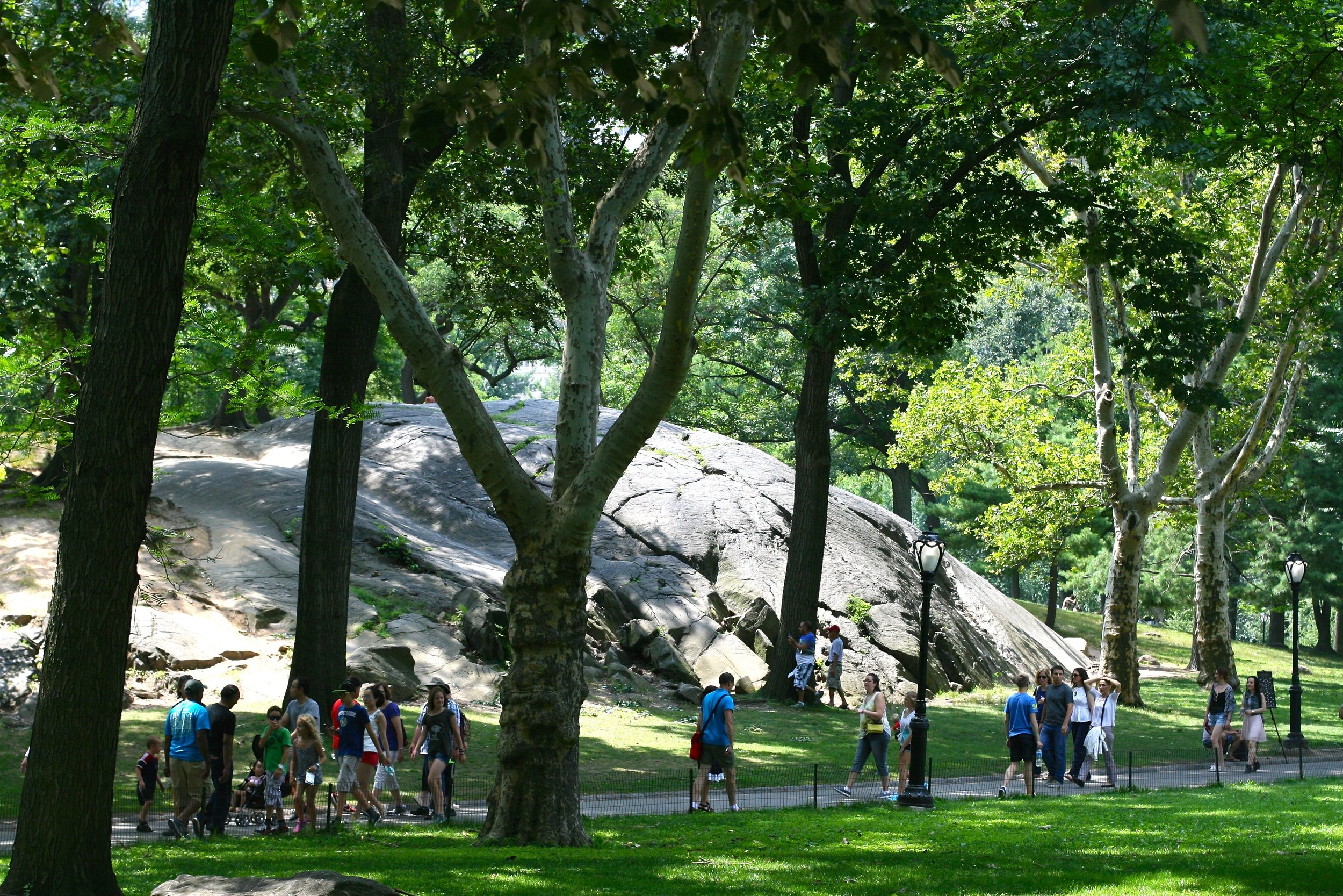 Summer in New York means the park is always packed with ecstatic dogs and their multitudes of humans.