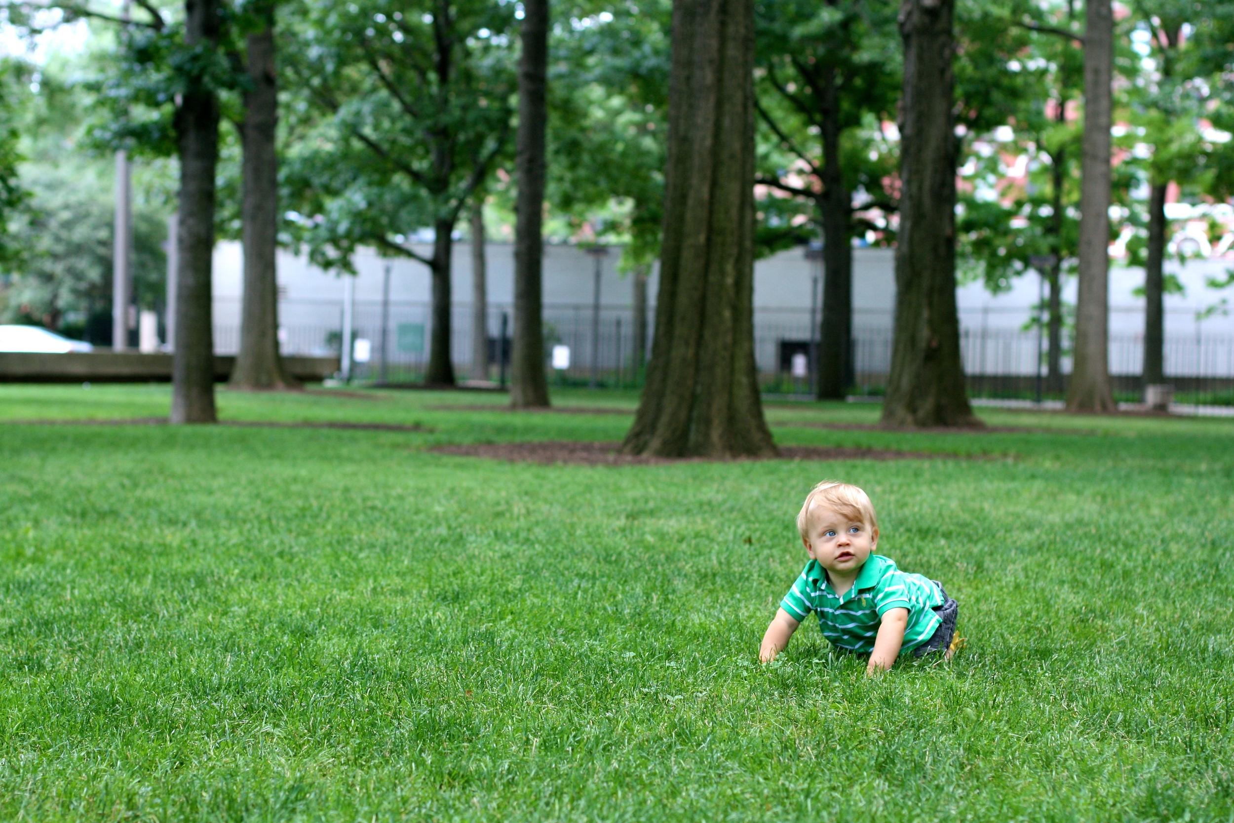 Those wild grasses of New York City.