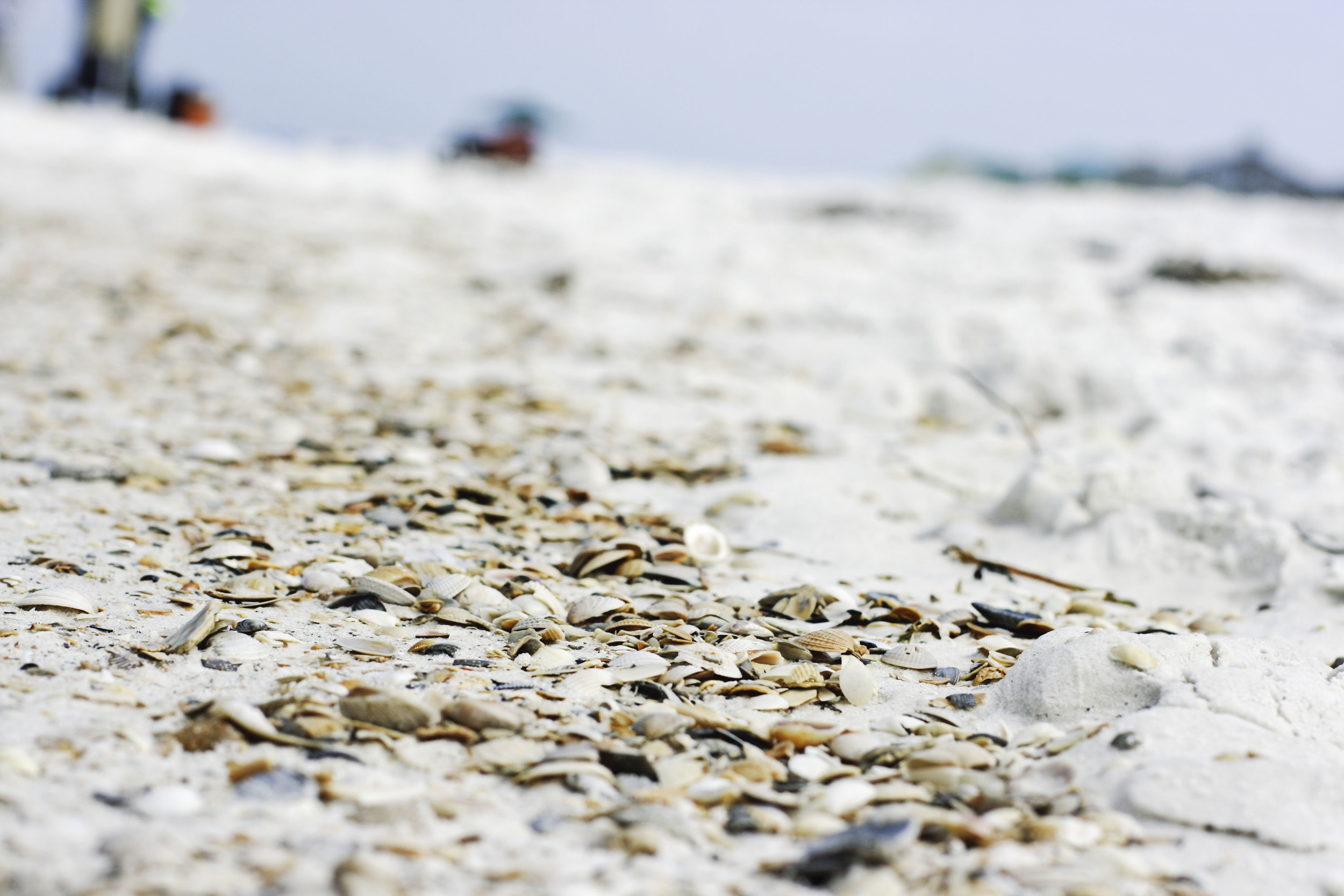Cape Shells.jpg