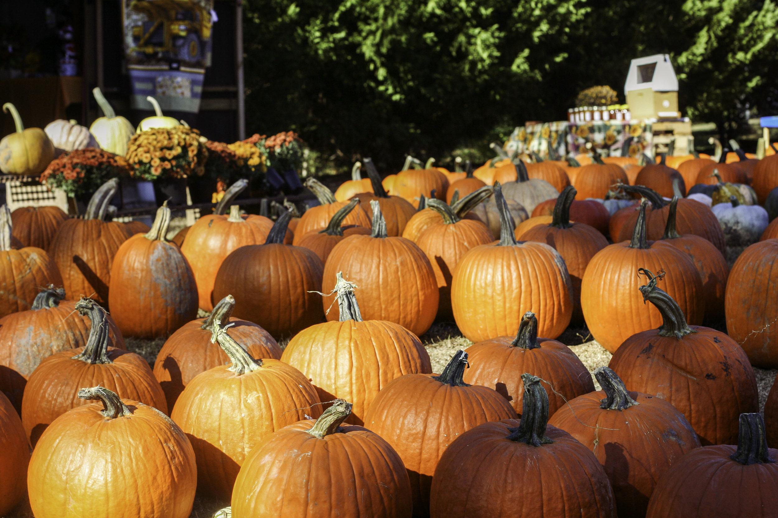 Pumpkin Patch15.jpg
