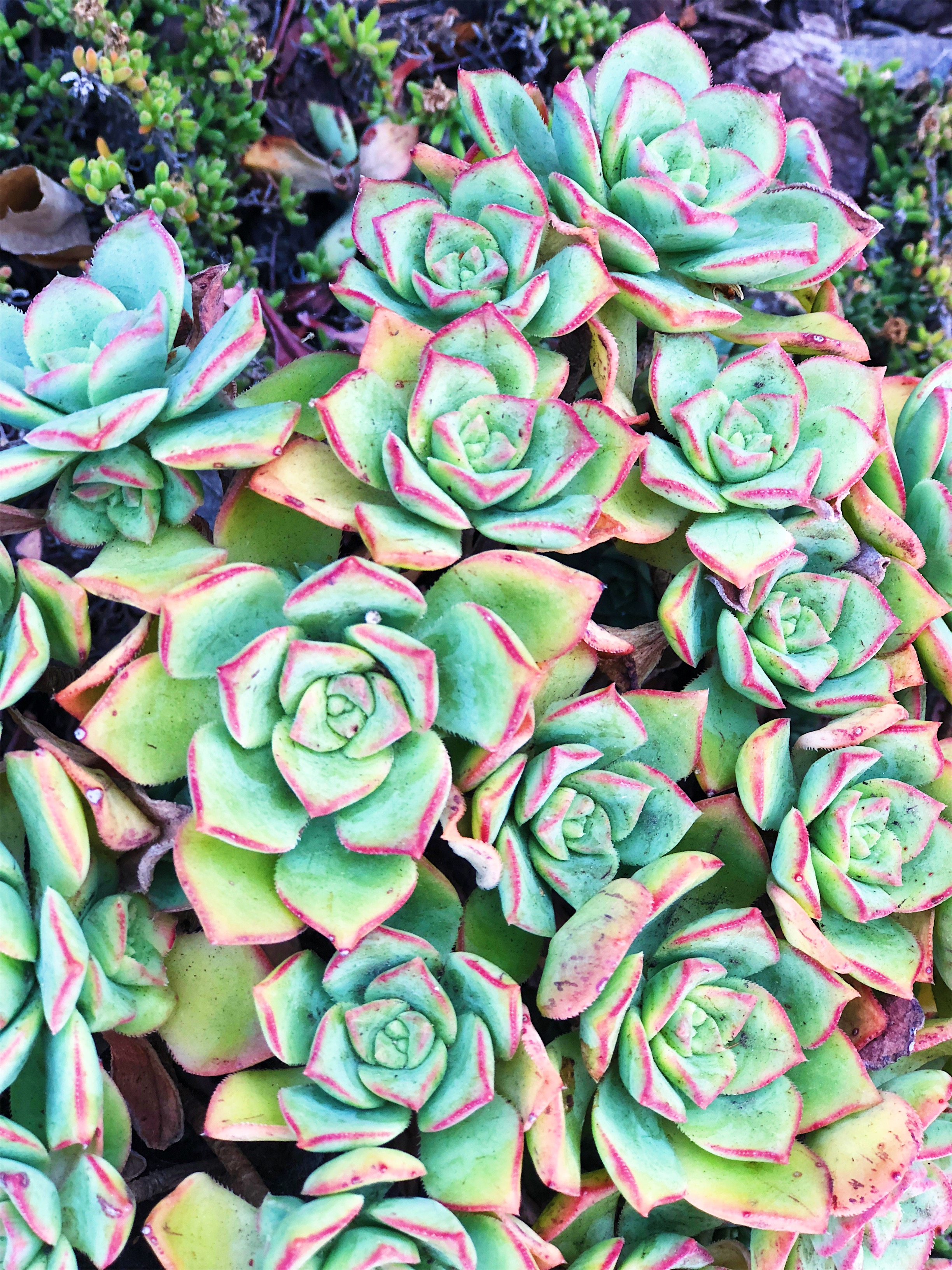 The succulents grew like weeds. Like the most beautiful, stylish, Instagram-approved weeds.