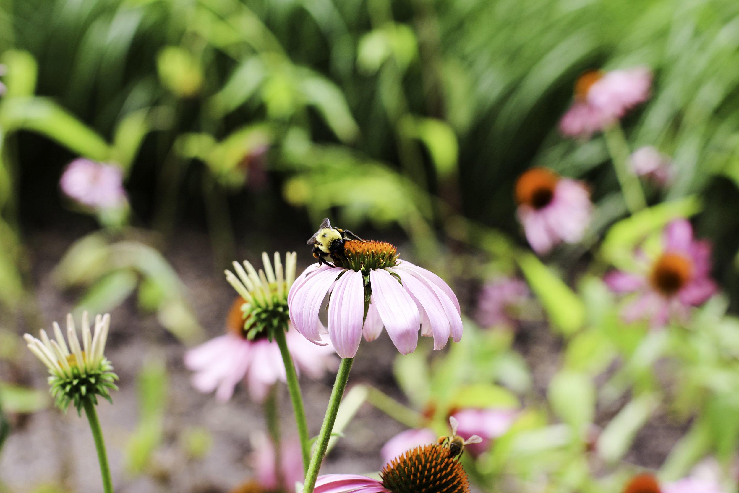 Flowers nyc.jpg